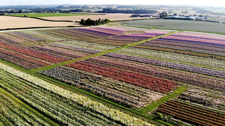 Holistic Approach to Sustainable Agriculture